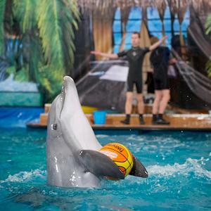 Дельфинарии, океанариумы Загорянского
