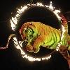 Цирки в Загорянском