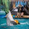 Дельфинарии, океанариумы в Загорянском
