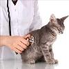 Ветеринарные клиники в Загорянском